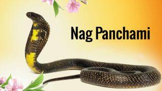 Nag Panchami 2017 Puja Muhurat: Vidhi, Mantras in Hindi to celebrate Snake Festival