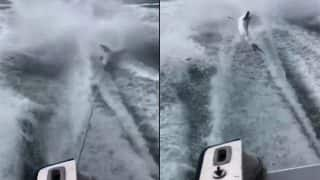 Video of Shark Being Dragged Mercilessly by Speed Boat Goes Viral
