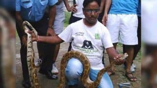 Python Rescued From Air Force Station in Delhi! Seven-Foot-Long Python's Picture Goes VIRAL!