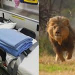 Gujarat woman gives birth inside ambulance surrounded by a pride of 12 hungry lions!