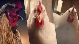 KFC's The Whole Chicken Flawless Advertisement has Witnessed Worldwide Outrage!