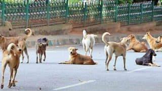 Pack of Stray Dogs Guard Abandoned Six-Month-Old Baby Girl At Howrah Station For Hours Till The Time Help Came