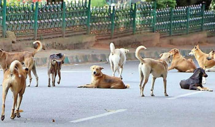 Image result for stray dogs in Sitapur