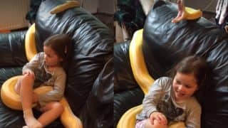 12 feet-long Python Gives A Yawn While Watching TV With Owner's Little Girl Is The Best Thing On Internet Today (Watch video)
