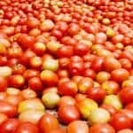Armed Security Guards Protect Tomato Trucks in Indore as Prices Reach Rs 100 at Many Places