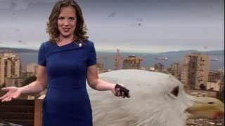 Giant Seagull Disrupts Live TV Weather Forecast, Reporter Breaks Into Peals Of Laughter (Watch Viral Video)