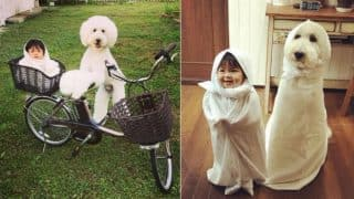 11 Pictures of the Japanese Toddler Girl and her Pet Giant Poodle are a Pure Joy