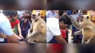 This Monkey Is The New Godman In Town, Better Trust Him Than Babas like Gurmeet Ram Rahim