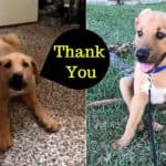 A Little Puppy Just Said 'Thank You' To Owner, Cute Pet Video Goes Viral