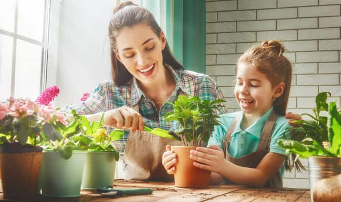 Mosquito Repellent Plants 5 House Plants That Keep Mosquitoes
