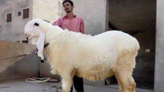 बकरीद पर कुर्बानी के विरोध में क्यों उतरा मुस्लिम समाज? जानें...
