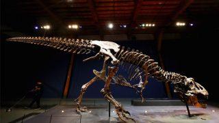Patagotitan Mayorum: Largest Known Dinosaur Finally Gets A Name
