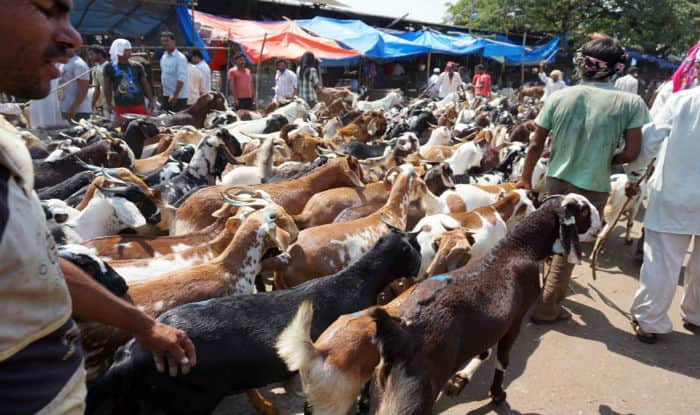 Eid al-Adha 2017: This Bakra Eid, Premium Goats Available