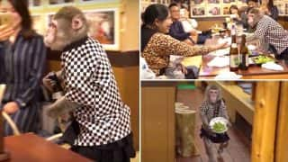 Monkeys Serve Beer To Guests At This Japanese Bar (Watch Video)