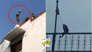 Monkeys Hoist Indian Flag on Independence Day! Watch Viral Videos of Patriotic Animals' 15th August Celebrations