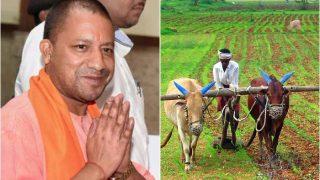 UP: CM Yogi to distribute loan waiver certificates to farmers on August 17 | यूपी: किसान ऋण माफी योजना के सर्टिफिकेट बांटेंगे सीएम योगी