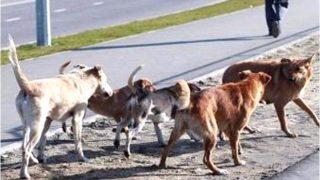 आवार कुत्तों ने आठ साल के बच्चे को बनाया अपना शिकार, काटकर मार डाला