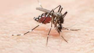 Dengue Wreaks Havoc In Tamil Nadu, National Vector Control Programme Raps Government For Not Taking Effective Measures
