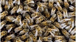 55-year-old Woman Dies After Undergoing Live Bee Acupuncture Treatment in Spain