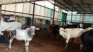 Animals Languish Without Food And Medicine at Shelter in Noida