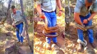 Huge Python Traps Snake Catcher and Attempts to Crush him to Death in Scary Video