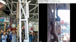 Anaconda Snake Video From Dadar Station Real or Fake: Alleged Clip from Mumbai Will Leave You Petrified