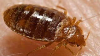 Home Remedies for Bed Bugs: घर में खटमलों से हो रहे हैं परेशान, तो इन घरेलू तरीकों से पाएं छुटकारा