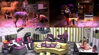 Bigg Boss 11 October 4 2017 Full Episode Written Update: Akash Dadlani Gets Playful With A Donkey; Shilpa Shinde-Vikas Gupta Have Yet Another Face Off