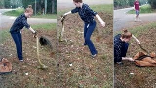 Female Cop Captures A 9 Feet-Yellow Anaconda With No Equipment, Video Goes Viral Of  Her Catching The Snake With Bare Hands