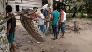 Man Wrestles 23 Foot-Long Python to Death After Deadly Battle With Giant Snake