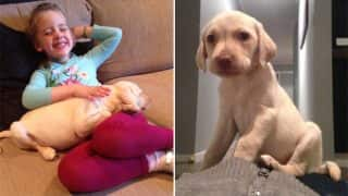 Australian Home Robbed, But Family Is Overjoyed After Receiving Stolen Pup Back