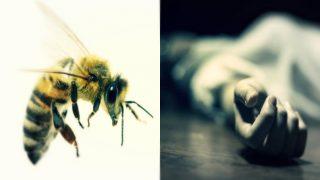 अंतिम संस्कार में मधुमक्खियों का हमला, शव को कब्रिस्तान छोड़ भागे रिश्तेदार
