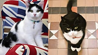 Meet Chief Mouser, British Embassy in Jordan Just Employed A Rescue Cat!