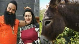 Donkeys Named Gurmeet Ram Rahim And Honeypreet Fetch Rs 11,000 At Ujjain's Gardhabh Mela