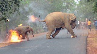 Photo of Elephant And its Calf on Fire Wins Sanctuary's Wildlife Photo Award