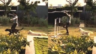 MS Dhoni Training His Dogs Zoya and Lily in This Viral Video is Simply Wow