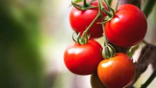 Tomato Price Rises to Rs 80 Per Kilogram in Delhi Due to Supply Disruption