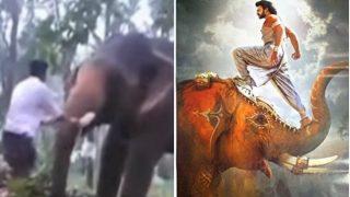 वीडियो: बाहुबली बनने चले इस युवक को हाथी ने ऐसा फेंका, हवा में लहराते हुए कई फीट दूर जा गिरा