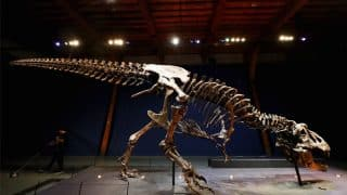 Fossils Of An Animal That Resemble Dinosaur discovered at Uttarakhand
