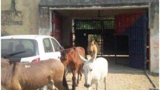 यूपी पुलिस ने गधे-घोड़ों को भी खिलाई जेल की हवा, ये था अपराध