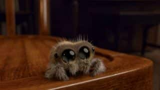 Lucas,The Most Adorable Animated Spider, Might Be The Cure To Your Arachnophobia!