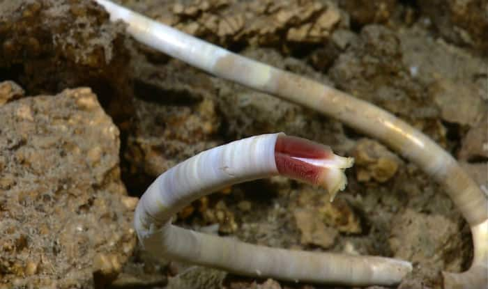 Earthworms can reproduce in Mars-like soil