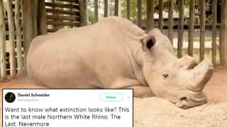 The Last Male Northern White Rhino's Heart-Wrenching Photo Goes Viral, This Is What Extinction Looks Like