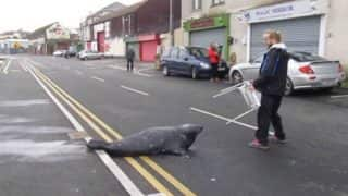 Sammy the Seal Goes Fishing at a Fishmonger's in Wicklow Town, Ireland; Twitterati is Highly Amused