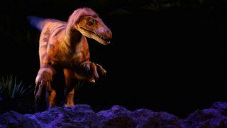 Dinosaur-like Creature Found in Uttarakhand, Scientists Baffled (Video)