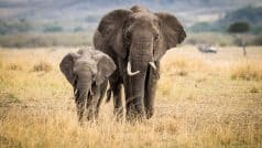 हाथी के साथ सेल्फी लेने के चक्कर में गई युवक की जान