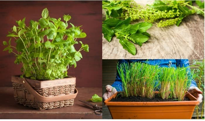 Indian Medicinal Plants: 5 Medicinal Herbs You Must Plant In Your