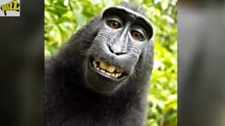 Indonesia's Selfie-Snapping Monkey Naruto is PETA's 'Person of the Year'