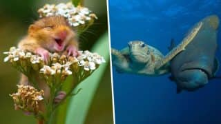 Comedy Wildlife Photography Awards 2017: These Funny Winning Pictures Will Make You Laugh Out Loud