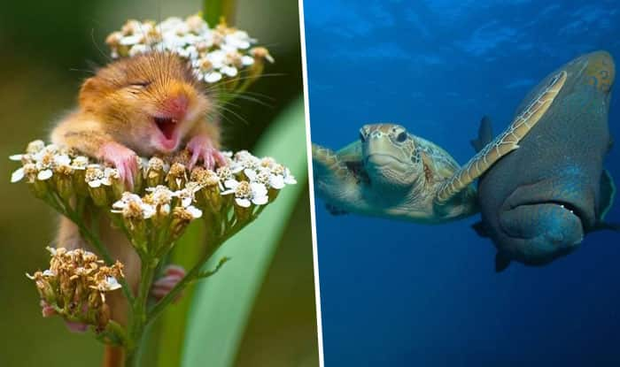 Image of: Wild Animals Comedy Wildlife Photography Awards 2017 These Funny Winning Pictures Will Make You Laugh Out Loud Indiacom Comedy Wildlife Photography Awards 2017 These Funny Winning
